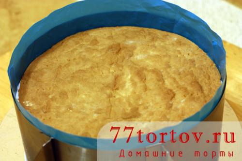 ryzhik-tort-18
